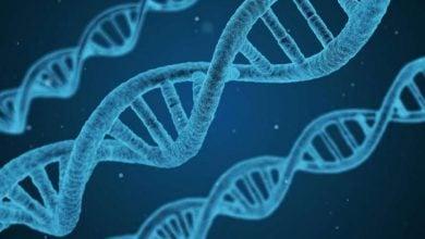 Photo of نقش پروتئین BRWD2/PHIP در بیان ژن