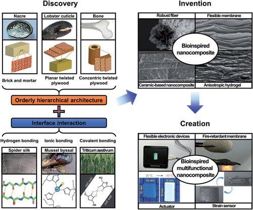 طبیعت الهامبخش نانوتکنولوژی - اخبار زیست فناوری