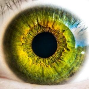 درمان مشکلات نابینایی به کمک سلولهای بنیادی – اخبار زیست فناوری