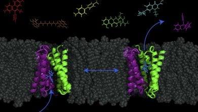 Photo of مدل جدیدی که امکان پمپ کردن آنتیبیوتیکها به درون سلولهای باکتری را نشان میدهد