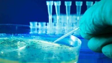 راه حل درمانی در مقابله با مقاومت چند دارویی باکتریها – اخبار زیست فناوری