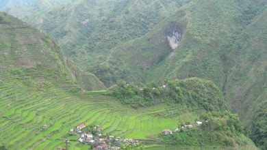 Photo of تبدیل مسیر فتوسنتزی برنج به C4 با انتقال ژنی از ذرت