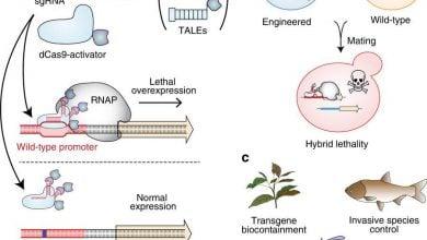جلوگیری از تولیدمثل GMOها و خویشاوندان طبیعیشان با «حصار ژنتیکی» - اخبار زیست فناوری