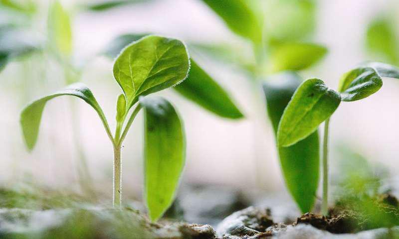 مشکل بزرگ تولید غذای جهان، راهحل خیلی ریزی دارد! - اخبار زیست فناوری
