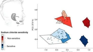 Photo of ارتباط پروتئینهای بزاق و مصرف بیش از حد نمک