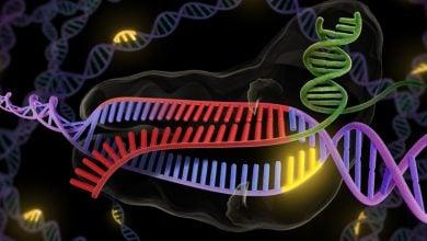 Photo of CRISPR / Cas9  ویرایش اپی ژنوم با بهره وری درمانی
