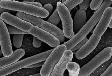 Feeding Overcrowded Bacteria Increases Antibiotic Susceptibility
