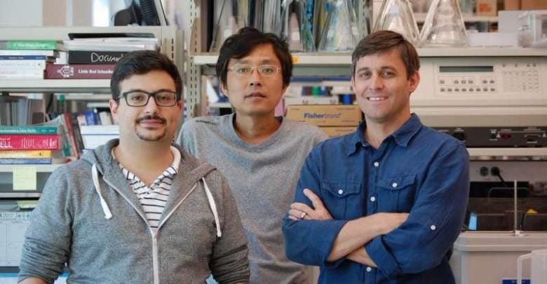 کشف کلید اصلی برای برنامه ریزی ایمونوتراپی سرطان_اخبار زیست فناوری