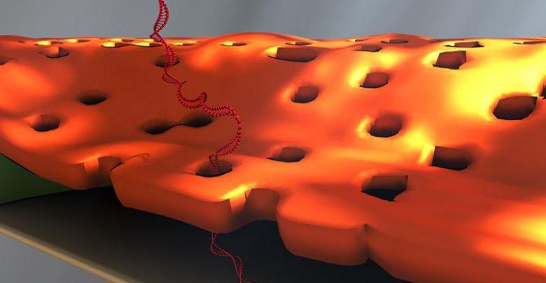 تشخیص اتفاقی موجب بهبود تشخیصDNA میشود!_اخبار زیست فناوری