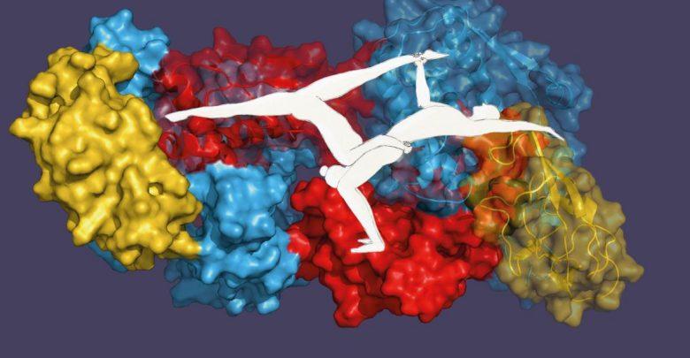 دوز آکروباتیک در سلول ها_اخبار زیست فناوری