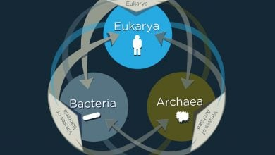 اشتراک ژنهای ویروسی با موجودات دیگر - اخبار زیست فناوری