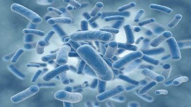 Photo of باکتری هایی در عمق اقیانوس که نقش مهمی در جذب کربن دارند