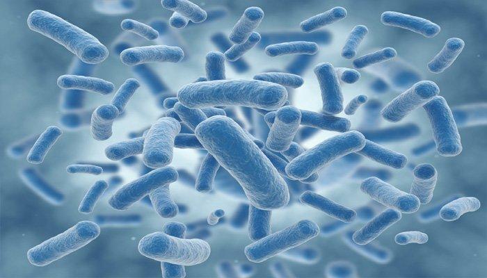 باکتری هایی در عمق اقیانوس که نقش مهمی در جذب کربن دارند - اخبار زیست فناوری