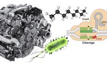 تاثیر CRISPR بر دیزل - اخبار زیست فناوری