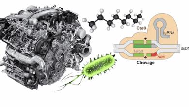 Photo of تاثیر CRISPR بر دیزل