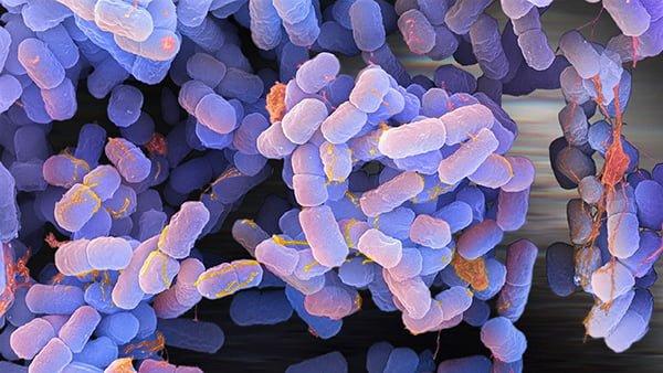 گردش موانع باکتریایی وابسته به تومور در نواحی متاستاتیک
