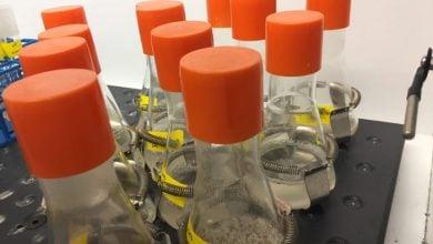 Photo of تبدیل باکتری ها به تولید کنندگان سوخت زیستی