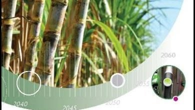 http://www.iea.org/publications/freepublications/publication/technology-roadmap-delivering-sustainable-bioenergy.html