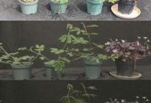 Photo of ریتم زندگی گیاهان در حین خورشید گرفتگی
