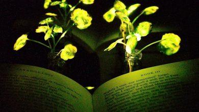 Photo of تولید گیاهانی که می درخشند
