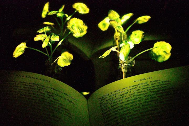 Engineers create plants that glow - اخبار زیست فن