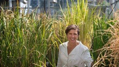 Photo of جایزه برای ایجاد فناوری جدید در جهت کشف ژن در گیاهان