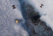 مقایسه میکرو ارگانیسم ها در مناطق قطبی - اخبار زیست فناوری
