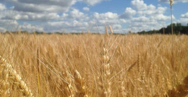 Fighting Plant Disease At Warm Temperatures Keeps Food On The Table - اخبار زیست فن