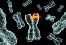 تغییر اثر داروها توسط جهش - اخبار زیست فناوری