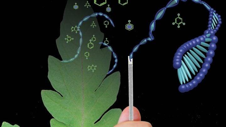 تکنولوژی جدید استخراج DNA برای تشخیص سریع بیماریهای گیاهی و جانوری - اخبار زیست فناوری