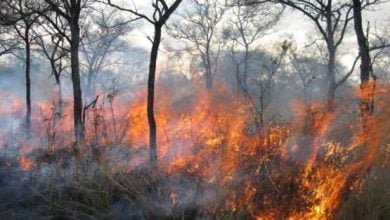 More frequent fires reduce soil carbon and fertility, slowing the regrowth of plants - اخبار زیست فن