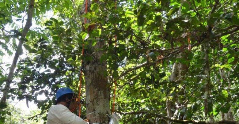 Radar satellites able to measure water stress in trees - اخبار زیست فن