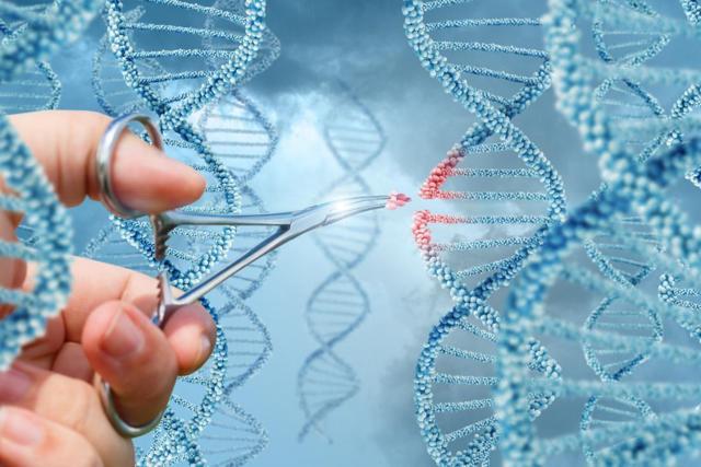 Sangamo Therapeutics: راه حل های مهندسی ژنوم برای بیماری های نادر _ اخبار زیست فناوری