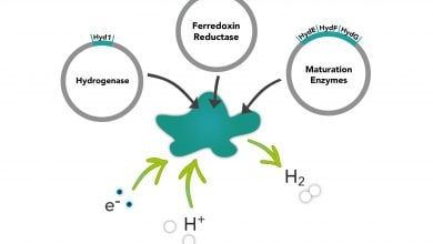 Photo of Hydrogen gas from enzyme production