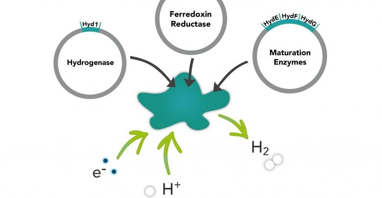 Hydrogen gas from enzyme production