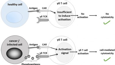 Photo of درمان سرطان با CAR-T cell گاما دلتا