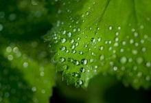 UGR research calls current methods of studying photosynthesis into question - اخبار زیست فن