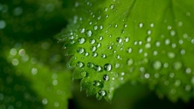 Photo of UGR research calls current methods of studying photosynthesis into question
