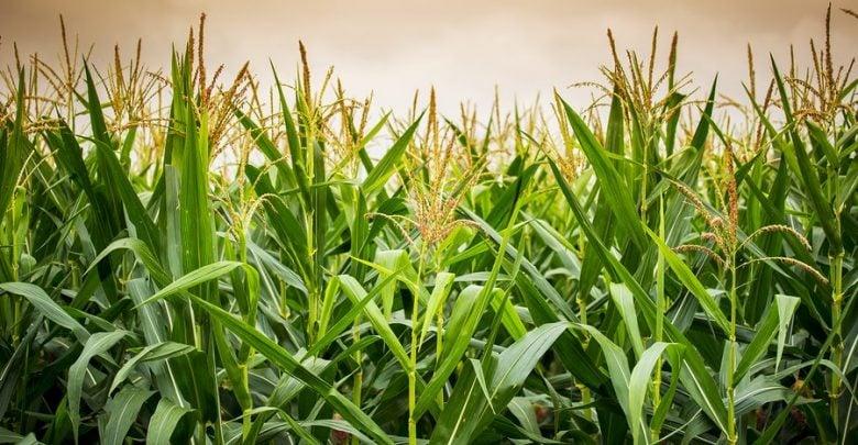 بهبود عملکردآنزیمی برای تولید سوخت زیستی - اخبار زیست فناوری