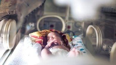 عملکرد سیستم ایمنی در جنین موجود در رحم-زیست فن