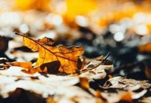 Polluted woods: Leaves contaminate soil with hydrocarbon