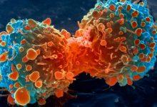 ارتباط پروتئینهای مهارکنندهی سرطان و آنتن سلولی - اخبار زیست فن