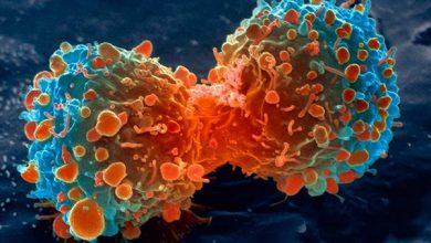 Photo of ارتباط پروتئینهای مهارکنندهی سرطان و آنتن سلولی