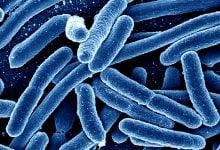 New gene-based model suggests, for microbes, it's not who you are but what you do