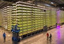 کشاورزی عمودی به روش هواکشت - اخبار زیست فناوری