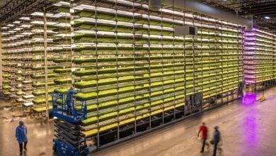 Photo of کشاورزی عمودی به روش هواکشت