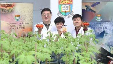 تولید گوجهفرنگی حاوی آنتیاکسیدان بالا با استفاده از مهندسی ژنتیک - اخبار زیست فناوری