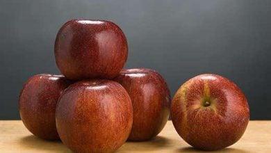 Photo of سیبهای جدید مقاوم به بیماری، محبوبتر از ارقام قدیمی