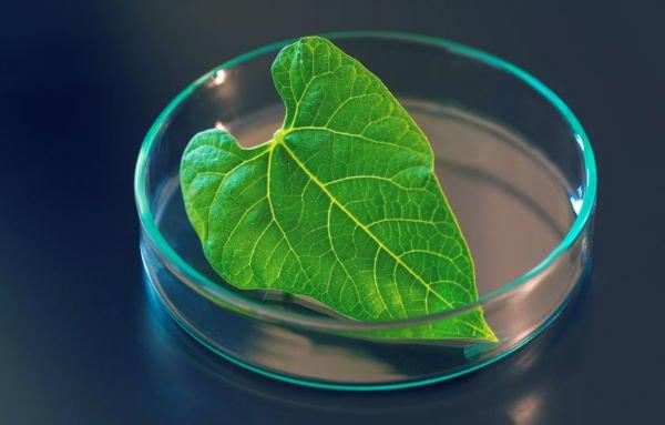 فتوسنتز مصنوعی از کاتالیزور جدید بزرگ می شود - اخبار زیست فناوری