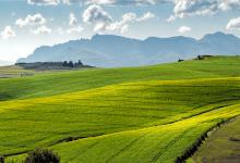 Photo of مشکلات کشاورزی ارگانیک در مقیاس بزرگ